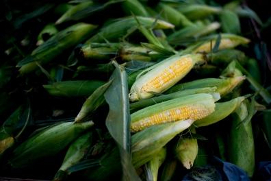 Corn is ready!!!