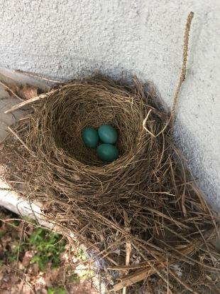 We found eggies!